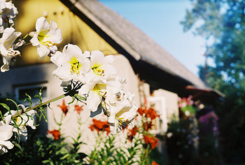 airudite:  lillies by Liis Klammer on Flickr.