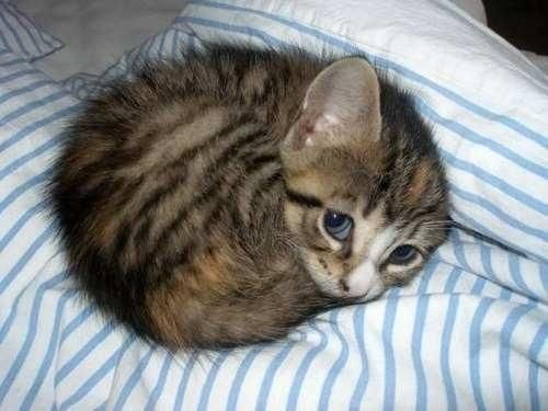 The cutest kitten in the whole wide world.