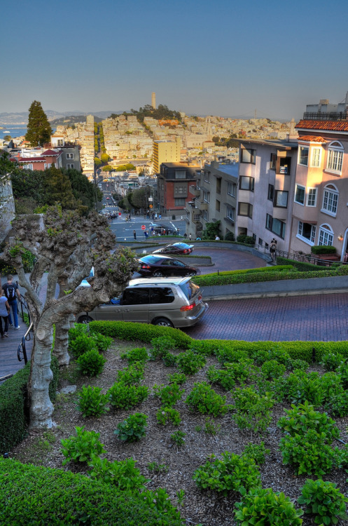 longlivesanfrancisco:  Lombard Street Vertical