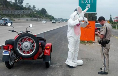 Easter Bunny riding motorcyle stopped by California Highway Patrol for not wearing helmetRead more: http://www.nydailynews.com/news/national/easter-bunny-riding-motorcyle-stopped-highway-patrol-article-1.1304456#ixzz2PEdQe0F8