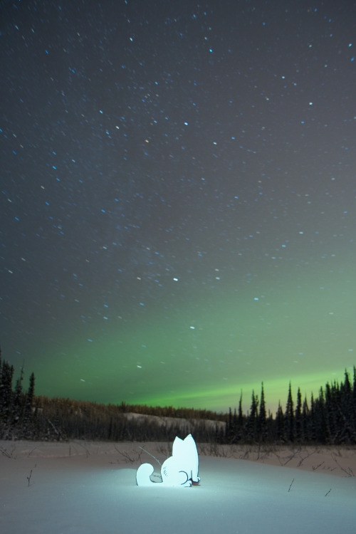 simonscatallovertheworld:  Amber Falcon Drive Whitehorse Canada