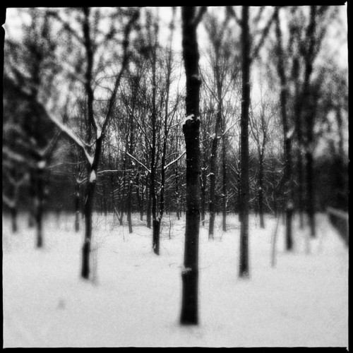 Trees in the wood under the snow in Paris #tree #snow #black #white #wood #france #paris  (à bois de Boulogne Paris)