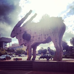 It's best not to mess with Joburg's #eland. (at Braamfontein)