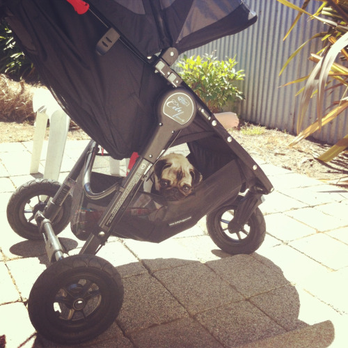 "bobdoom:  ""Diss is a good spot for a walk.""  PIOP: Strollers"