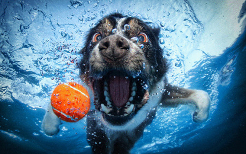 Underwater Photos of Dogs. www.yesemails.com/waterstuff/underwaterphotos/