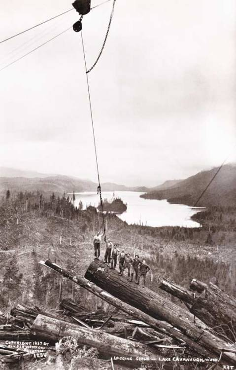 collectivehistory:  Loggers in Lake Cavanaugh, Washington pose on a massive log about to be lifted, 1937