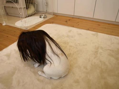 fake-mermaid:  fatass-mcnotits:  i know it's a dog in a wig but this seriously looks like the beginning of either creepypasta or a japanese horror film  i thought this was the grudge  Nina….?