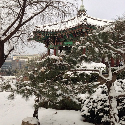 #winter #scene #garden #snow #newyear #seoul #korea  (at 신라면세점 (新罗免税店, The Shilla Duty Free Shop))