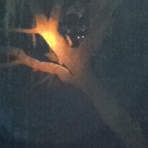 Omg I saw bears in tree!!!!! 💅🐻 #natureswag