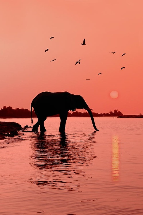 disminucion:  Sunset With Elephant