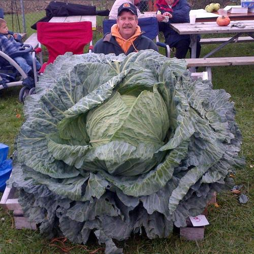 snarg:  my dads friend and a giant lettuce