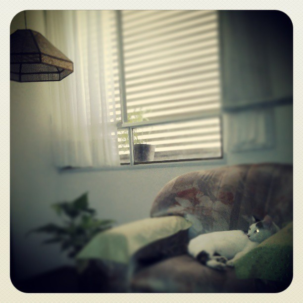 "Sleepy cat"", #kitty #cat #vintage #photography #quietroom #rosario #MrD413 #mood  (at D413's FORTRESS)"