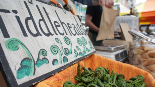 For a couple weeks a year, Deep Mountain Maple brings fiddleheads to market. They pick them wild, from the forests where their maple trees are.