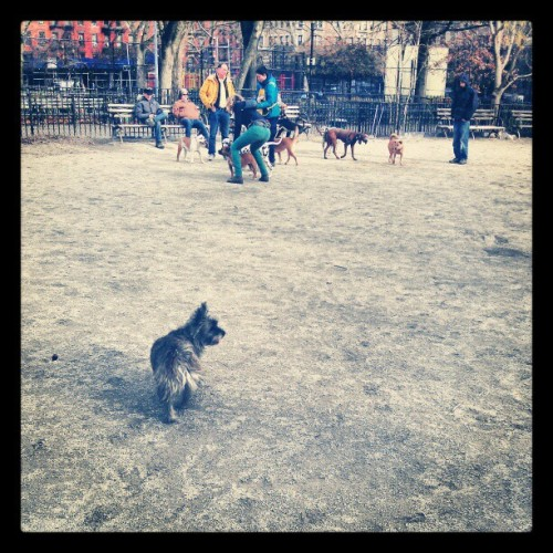 Brisk day at Tompkins Square Dog Run with Grace!