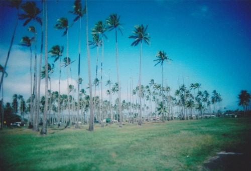 shaycat:  33 coconut trees