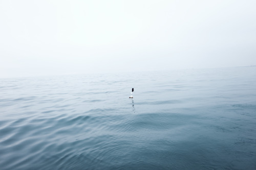 drowningwaters:  I (by Roc Canals)