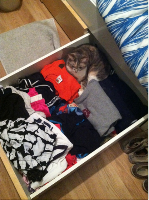get out of there cat. you are most definitely not an article of clothing, nor can i wear you to sleep.