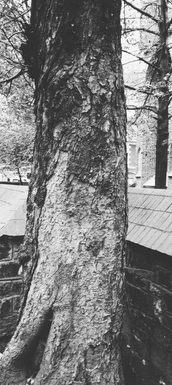 Przemysław Szawłowski #photography#fotografia#foto#fotografo#fotograf#art #artists on tumblr #photographie #photographers on tumblr  #photography on tumblr #bw#bnw #black and white photography #monochrome photography#streetphotography#cityphotography#places#wrocław#trees#bwphotography#bwphoto#photooftheday#bnwphotography#photo#artwork