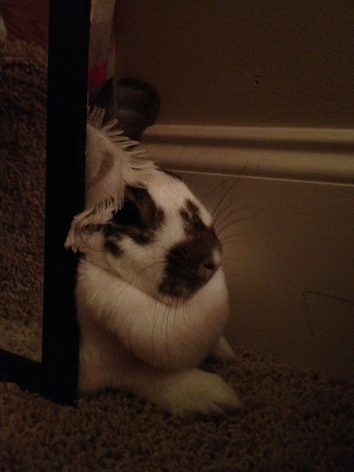 This is where she goes to hide from me.  I swear, she has the biggest dewlap and its just getting bigger. Any particular reason?  Shes so cute though.