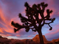 Sunset at Joshua Tree National Park, in the Mojave Desert, California.