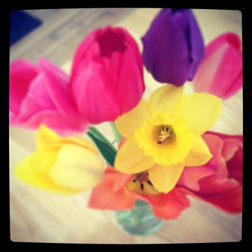 aunt joy and @drz9 brought me pretty #spring #flowers 💛❤💜💖💚