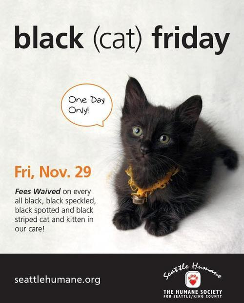 seattlish  u2014 seattle humane society wants to give you a black cat on black friday  for free