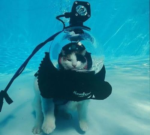 the-absolute-funniest-posts:  100percentcats: scuba cat My lovely followers, please follow this blog immediately!