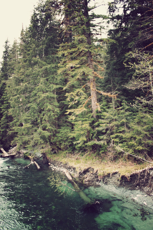 mystic-revelations:  (by warmsummernight)