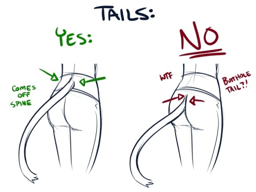 "natomi:  natomi:  coffeeandcockatiels:  tenakiluvsyou:  preservedcucumbers:  A simple PSA, lest your tail-sporting character look like they're walking around with a really long poop hanging out of their pants.  XD  Urk… The second one is actually anatomically correct. You'd have to either have a second spinal extremity, de-attach the spine from the sacrum, or somehow get rid of the entire sacrum—which is a large chunk of the pelvis and one of the last bones in the spine. It's the bone that supports the spine and attaches it to the pelvis. Without it, you destabilize the entire skeleton. It's that hard place nestled between our booty cheeks that always makes us uncomfortable on hard seating. The tail would logically extend from the sacrum—that's where the coccyx protrudes from. The tiny tail piece left over from our ancestors. That's where the tail protrudes from on non-humans, and yeah, that makes it a ""butthole tail.""     Sorry to add the commentary but I study anatomy and it's hard to overlook stuff like this. I feel that misinformation should be stopped whenever possible.  THANK YOU!  I'm re blogging again so whenever someone tells me my character has an ass tail I'll slam their head against this very informative correction."