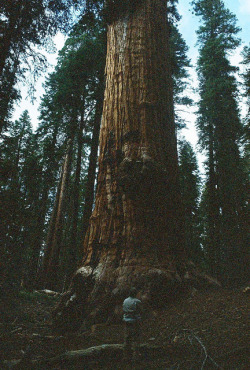 vacants:   (by Walk Robins)   I need to see this tree