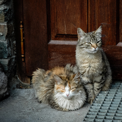 animalkingd0m:  Gatos I by Jorge Roig