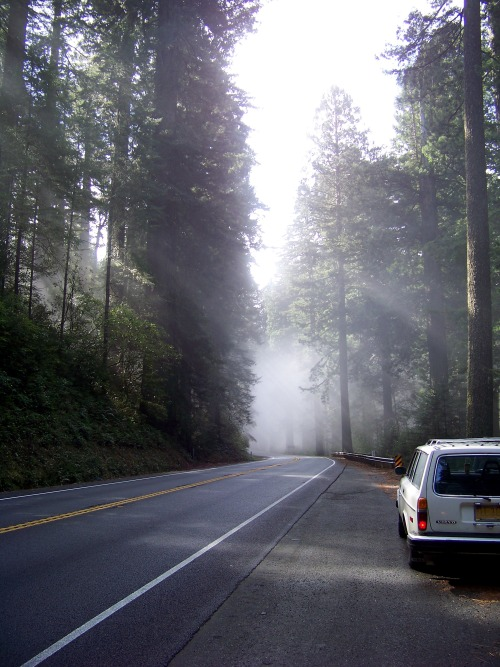 volvorine:  encourageous:  Morning in the Redwoods.  Aaaaah lovely Volvo 245