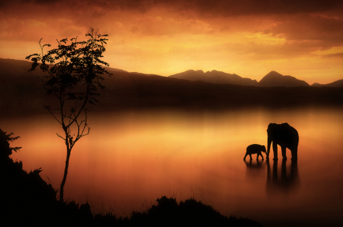 The Elephants at Sunset by Jenny Woodward on 500px