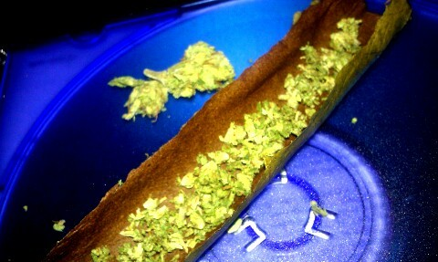 drugsandweed:  #Roll Up #Smoke #Weed #Loud #Oshi Rolo stoned-oshi-rolo.tumblr.com