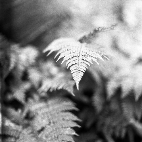 V on Flickr.Mamiya C330f 80mm F2.8 HP5 Rodinal 1+50
