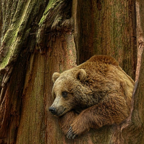 coisasdetere:  Urso by Peter Holme III