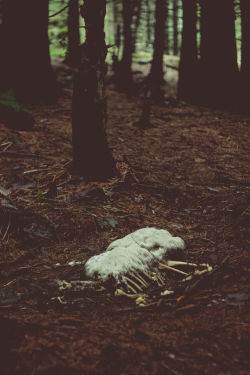 Death at Lady Clough Forest Trail, Derbyshire  Jan 2013