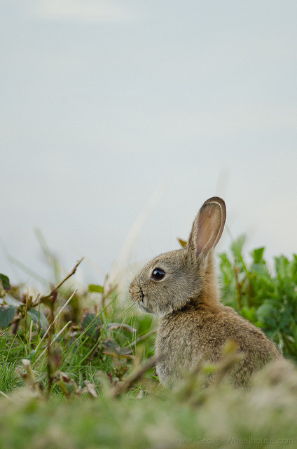 animalgazing:  Posing Bunny by Old-Man-George
