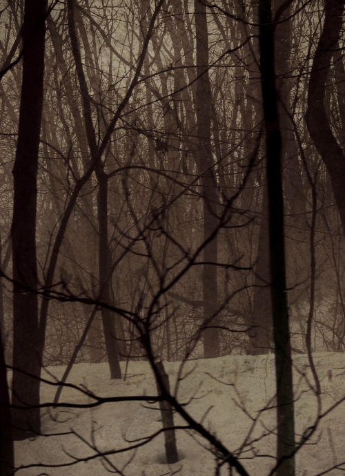 absinthius:  Michigan Forest