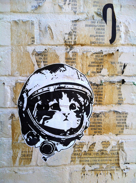 gildo-x:  shakethexcess:  it's a catstronaut      Cats in Space!