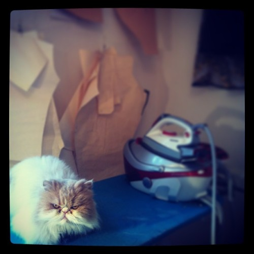 My studio friend. #workday #studio #independent #fashion #catsofinstagram #cat #sewing #sew