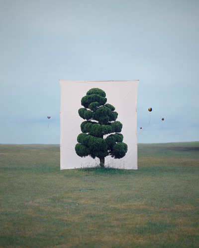 Tree by Myoung Ho Lee Simple in concept, he makes us look at a tree in its natural surroundings, but separates the tree artificially from nature.