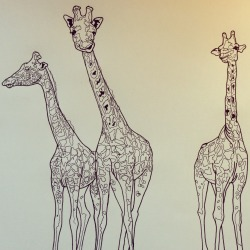 Wilderness - three giraffes - pen on paper
