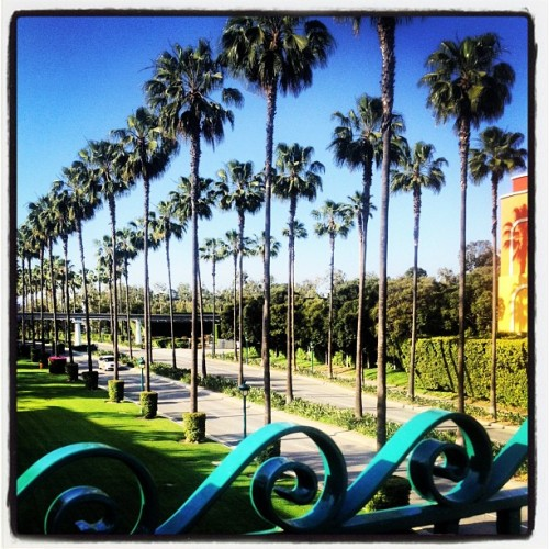 So I stole this from @shae_c but YAY #palmtrees #losangeles #LA #ca #california #westcoast