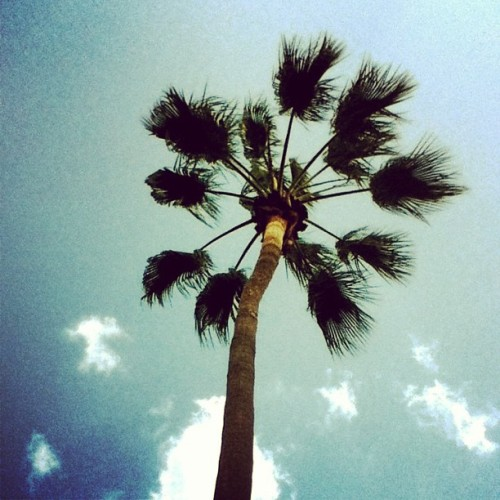 Palm trees are my favorite trees. #california #socal
