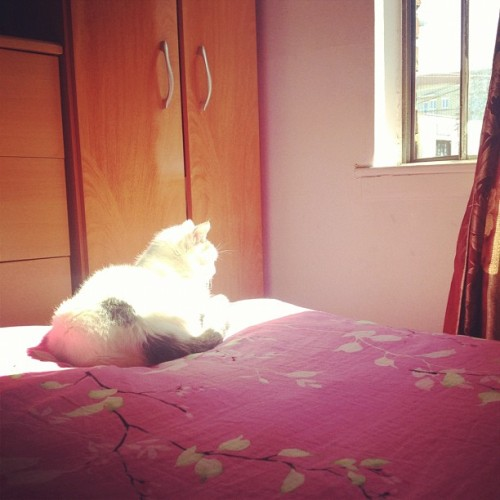 Now that it's getting sunny, my cat can start sunbathing again! #kitty