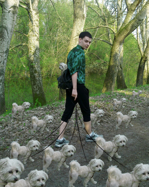 funny-pictures-uk:  Just taking the dogs for a walk.