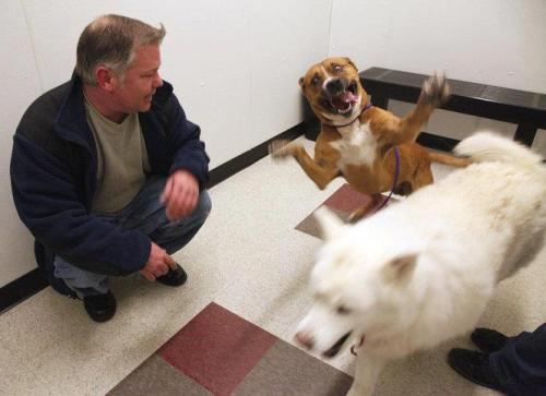 This guy is so happy to finally be adopted