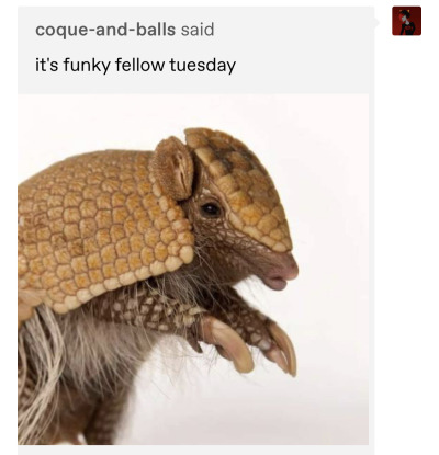 the same ask. the image has been revealed to be a picture of an armadillo.