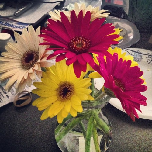 Daisies from the garden :)